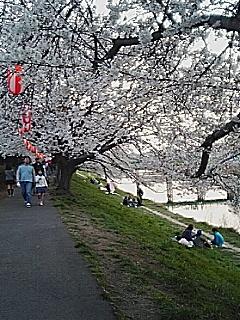 桜舞い散る…